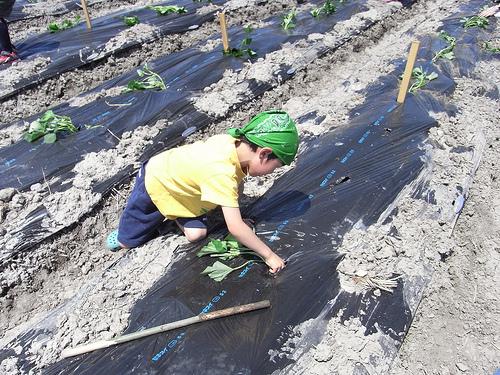 淡河農都ふれあい隊で田植えをしてきました